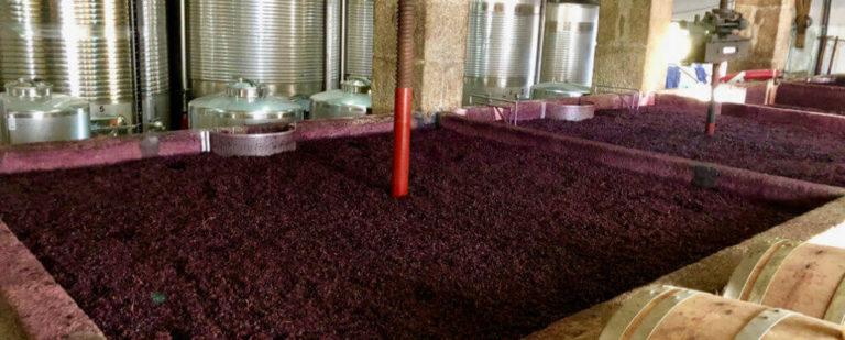 Какая оптимальная температура брожения вина и как ей управлять?